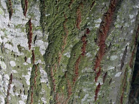 Background Images Of Trees by Wallpapers Tree Bark Wallpapers