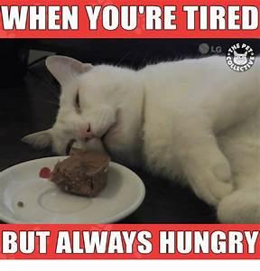 Tired Meme Related Keywords - Tired Meme Long Tail ...