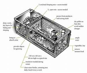 Hutch Diagram    Rabbits    Animal Care    Caring For Animals    Ethics    Teaching Science    Home