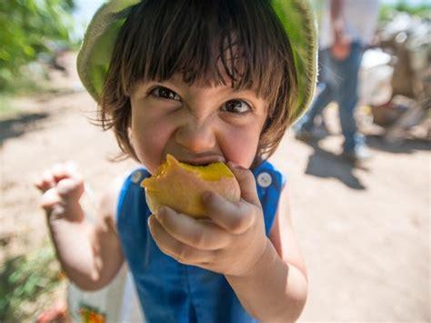 Schnepf Farms Peach Festival Spread Over Several