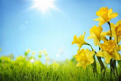 Spring Backgrounds Wallpapers
