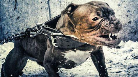 avoid   dangerous dog breeds   costs