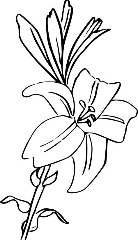 coloriage fleur lys  imprimer sur coloriages info