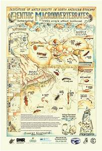 Image Of Stream Macro Invertebrates Poster