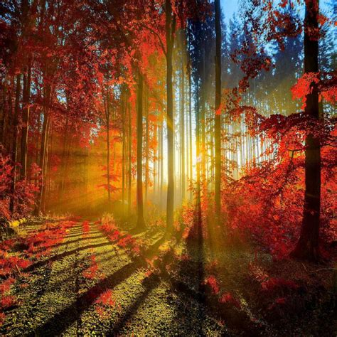 Desktop High Quality Fall Backgrounds by Sunset Autumn Fall Trees Backdrops Vinyl Cloth High