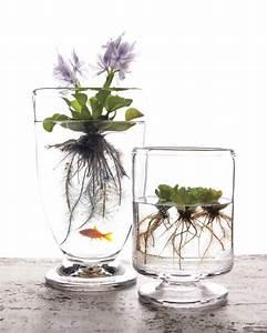 La Plante Aquatique Dcoration Intrieur Et Extrieur