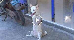 Dog With No Front Legs Gets Around By Walking Like a Human