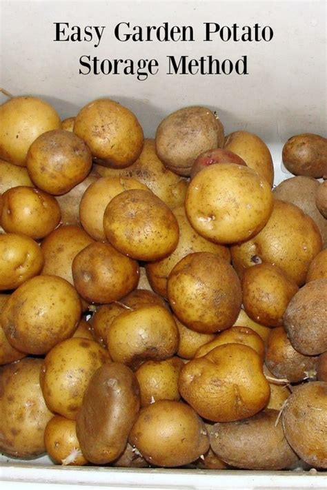 how to potatoes from garden how to potatoes from your garden in february