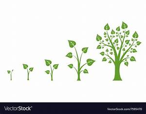 Tree Growth Diagram Royalty Free Vector Image