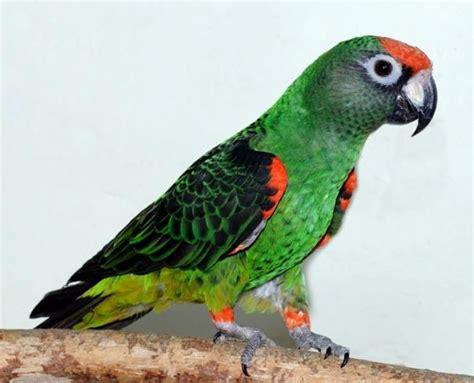 Best 25+ Parrot Bird Ideas On Pinterest