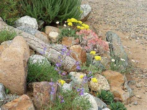 Sukkulenten Garten Anlegen by Steingarten Bepflanzen Tipps Moderne Gartengestaltung