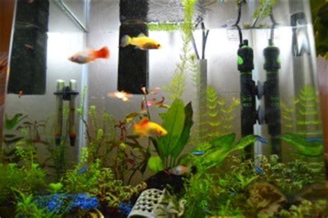 nettoyer le fond de l aquarium vends echange aquarium platy aspirateur de sol 69