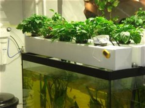 cuisine mondial kit culture de cannabis en aquaponie du growshop alchimia