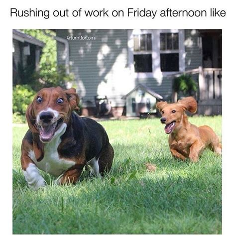 Friday Dog Meme - dog friday meme 28 images 19 pictures that tells your real truth how you really want 1000