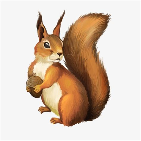 vector squirrel lovely squirrel pine nuts png