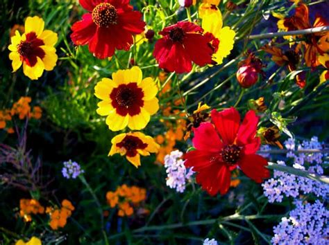 popular flowers   meanings gardening channel