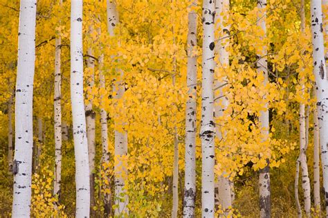 The Science Behind Fall Foliage « Tree Research « Tree Topics