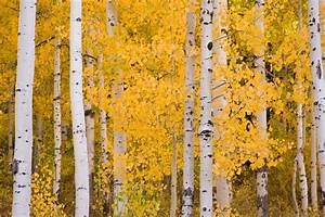 The Science Behind Fall Foliage « Tree Research « Tree Topics  Fall