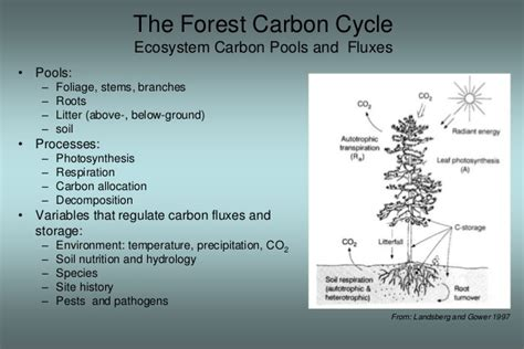 managed forest contribution  carbon sequestration