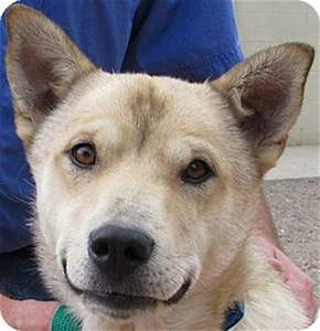 Butters   Adopted Dog   Trinidad, CO   Australian Cattle ...