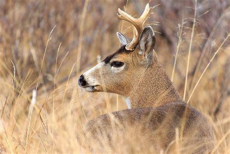 deer sitka blacktail hunting beach map wilderness lodge