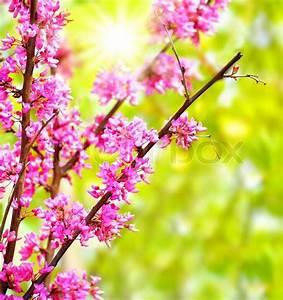 Rosa Blühender Baum Im Frühling : frische rosa bl hende blumen auf dem baum fr hling leben ~ Lizthompson.info Haus und Dekorationen