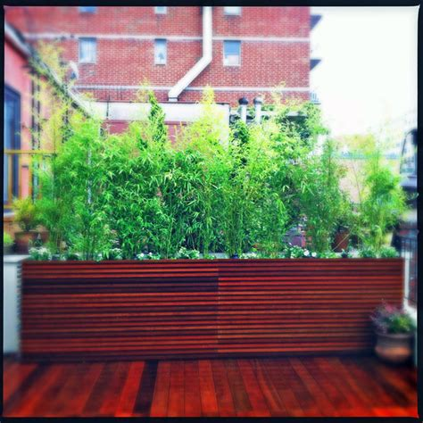 bamboo plants nyc chelsea nyc roof deck ipe planter boxes bamboo privacy screen birch contai contemporary