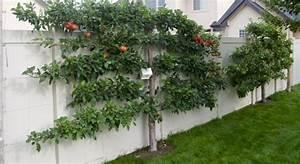 Spalierobst Im Garten Anbauen An Fassaden Und Mauern