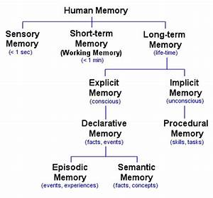 Types of Memory - The Human Memory