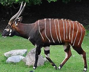 Image Gallery striped antelope