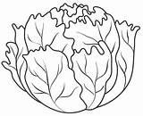 Lettuce Coloring Pages Vegetables Fruits Vegetable Food Colouring Fruit Leaf Drawing Printable Sheets Templates Lechuga Preschool Preschoolactivities Orange Patterns Para sketch template