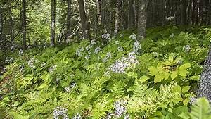 Life In The Taiga : boreal forest biome plants ~ Frokenaadalensverden.com Haus und Dekorationen