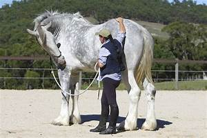 Amazing World: Noddy - The Tallest Horse in The World