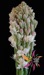 flower leis san diego wholesale flowers florist bouquets tuberoses
