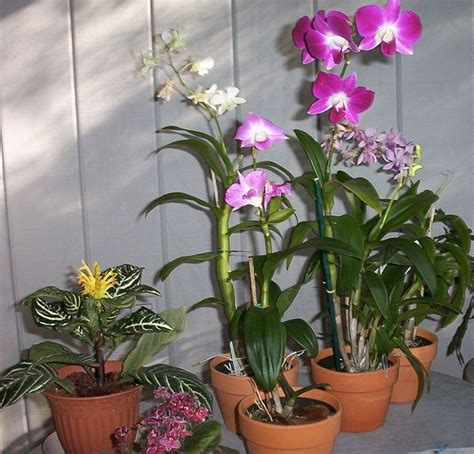 orchids care care for orchids outside pinterest