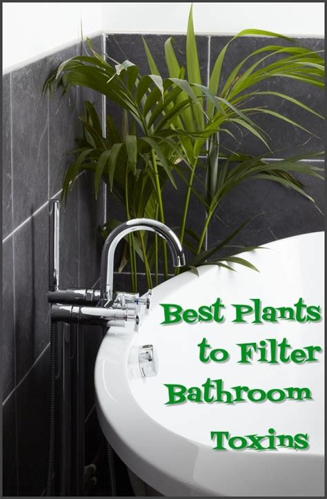 best plants for bathroom best houseplants to filter toxins in your bathroom