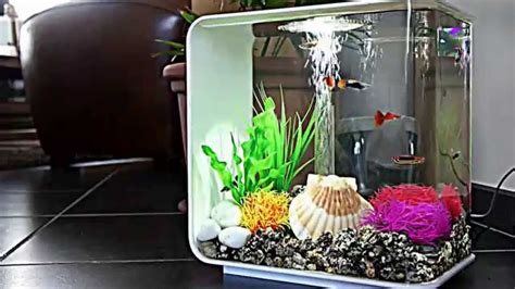 Biorb L Aquarium For Xander Youtube