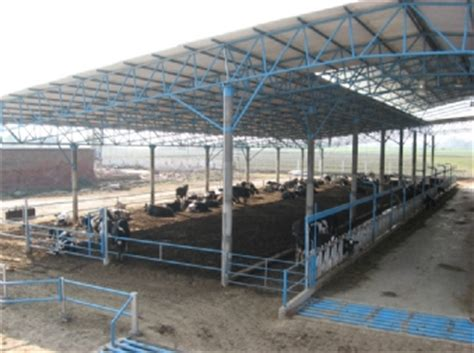 Dairy Cow Shed Design - sprecher project