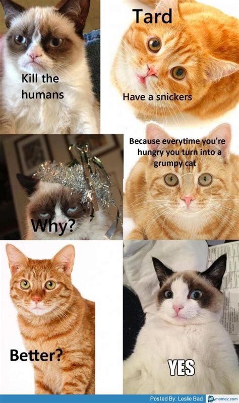 Tard The Cat Meme - grumpy cat have a snickers memes com