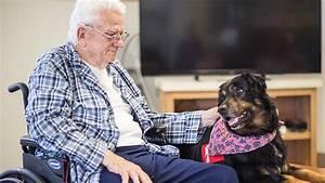 canine caregiver service dogs With dog caregiver