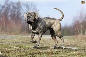 10 very unique dog breeds you may not know about