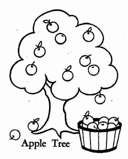 Apple Coloring Tree Pages Fruit Drawing Printable