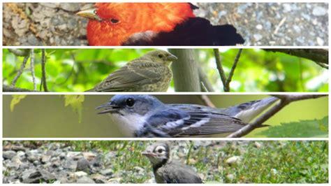 crow habitat images reverse search