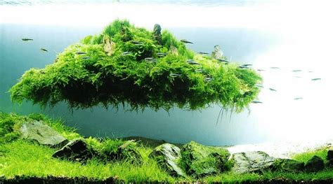 Japanese Aquascape Artist by Aquascaping Landscaping The Lost World Micro Aquatic Shop