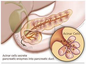 Pancreas Gland   www.pixshark.com - Images Galleries With ...