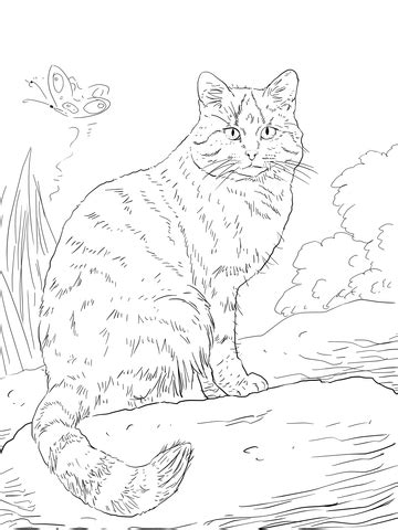european wild cat coloring page supercoloringcom