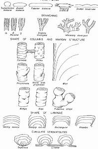 Morphology Of Stromatolites