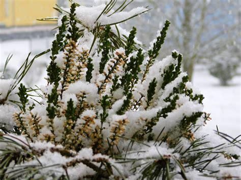 winterharte balkonpflanzen liste winterharte balkonpflanzen liste
