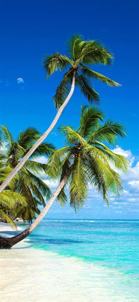Beautiful beach palm trees sea blue sky clouds