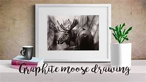 Moose - Graphite Pencil Drawing Time Lapse